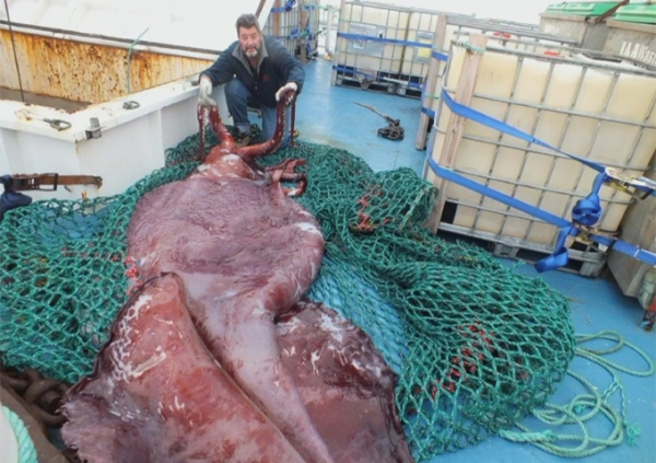 colossal-squid-main