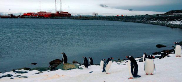 Bildresultat för Área Marina Protegida en la península Antártica