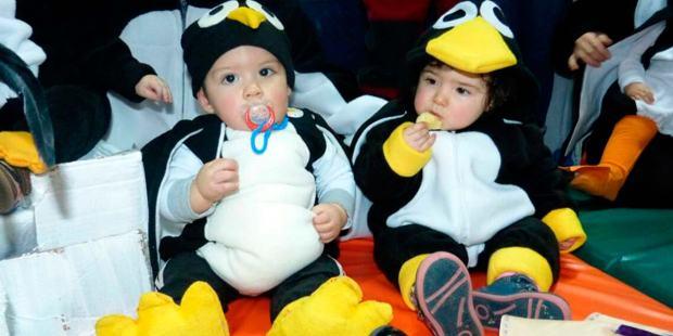 pinguino-3