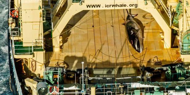caza-de-ballenas