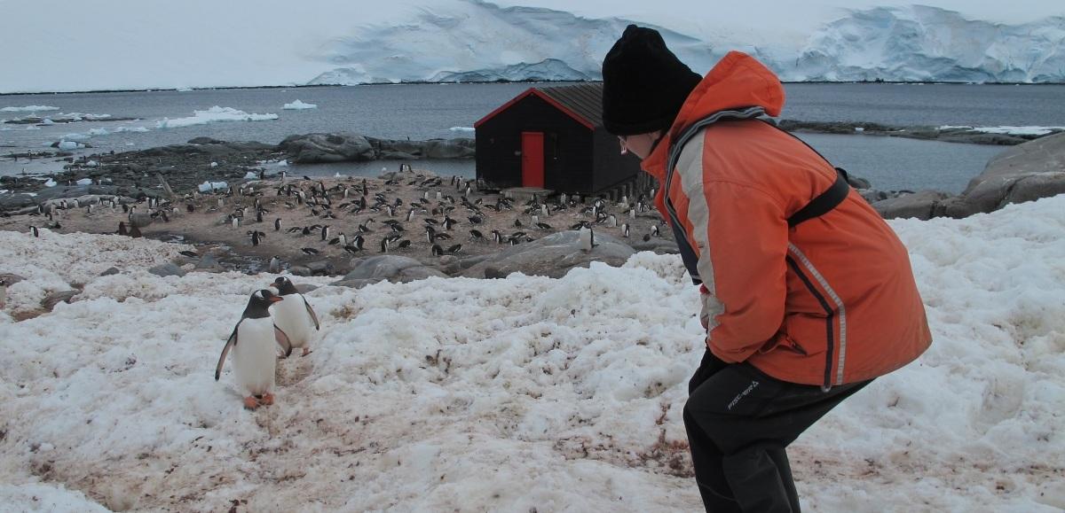 Impacto humano convierte a pingüinos en biotransportadores de contaminantes en suelo antártico