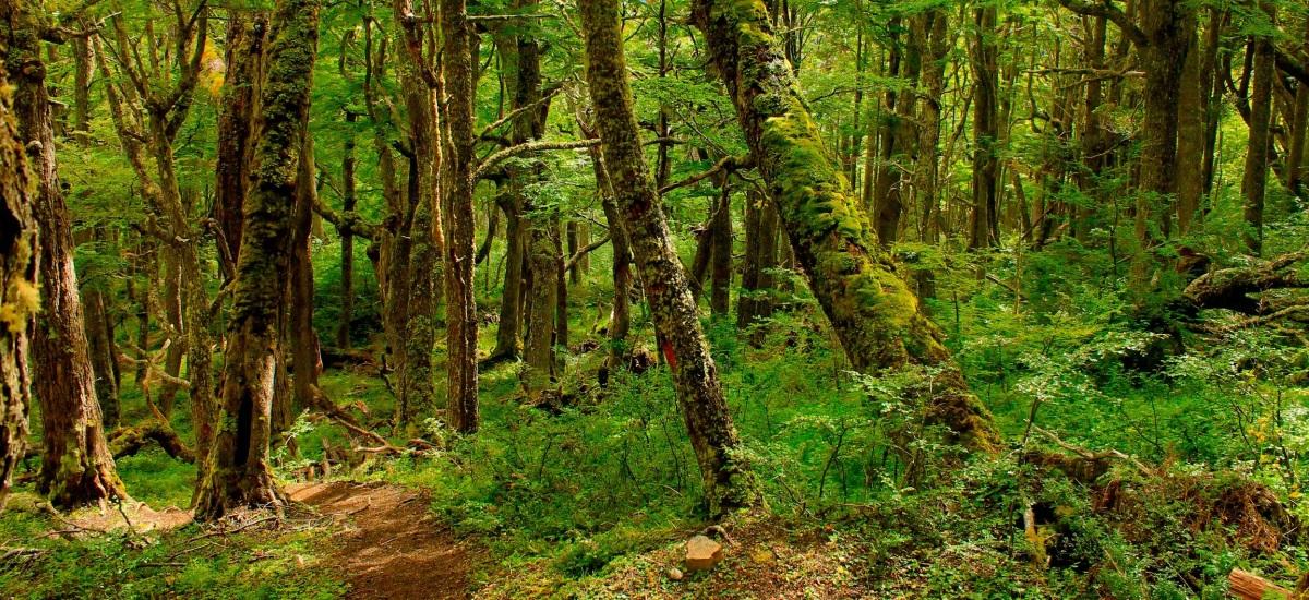 Reserva Mundial de la Biosfera Cabo de Hornos nuevamente entre los 100 destinos verdes del mundo