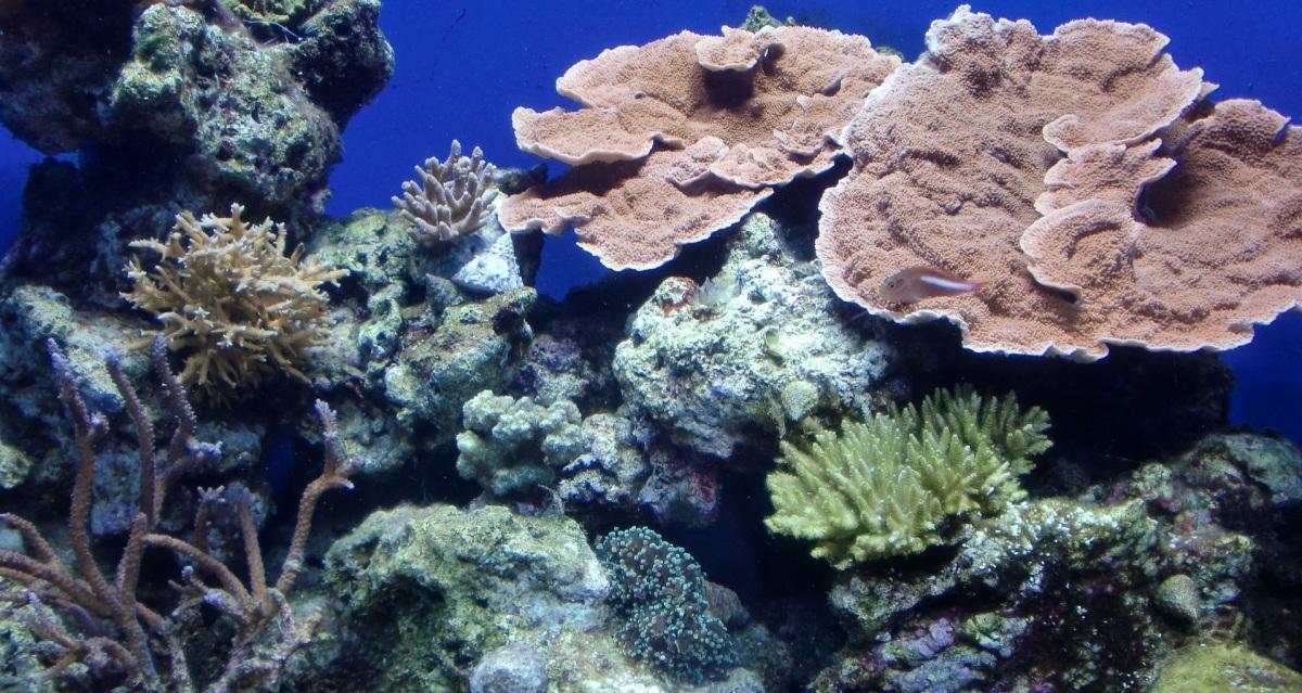 Acidificación de los océanos y sus consecuencias en los organismos marinos