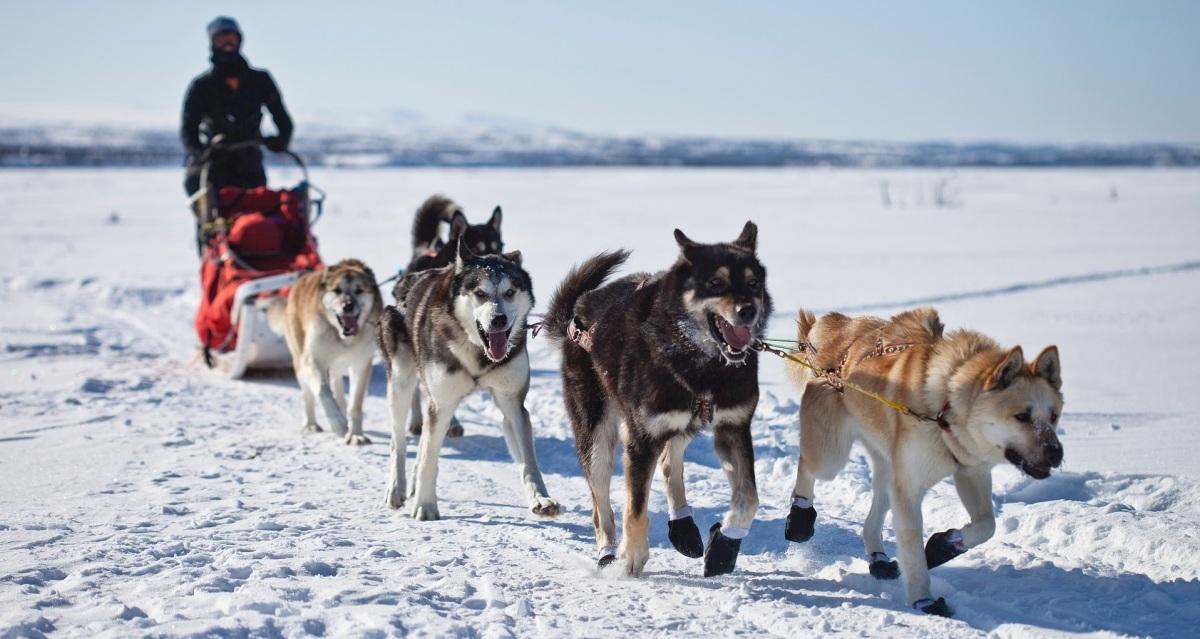 Perros de trineo: los héroes olvidados de la Antártica